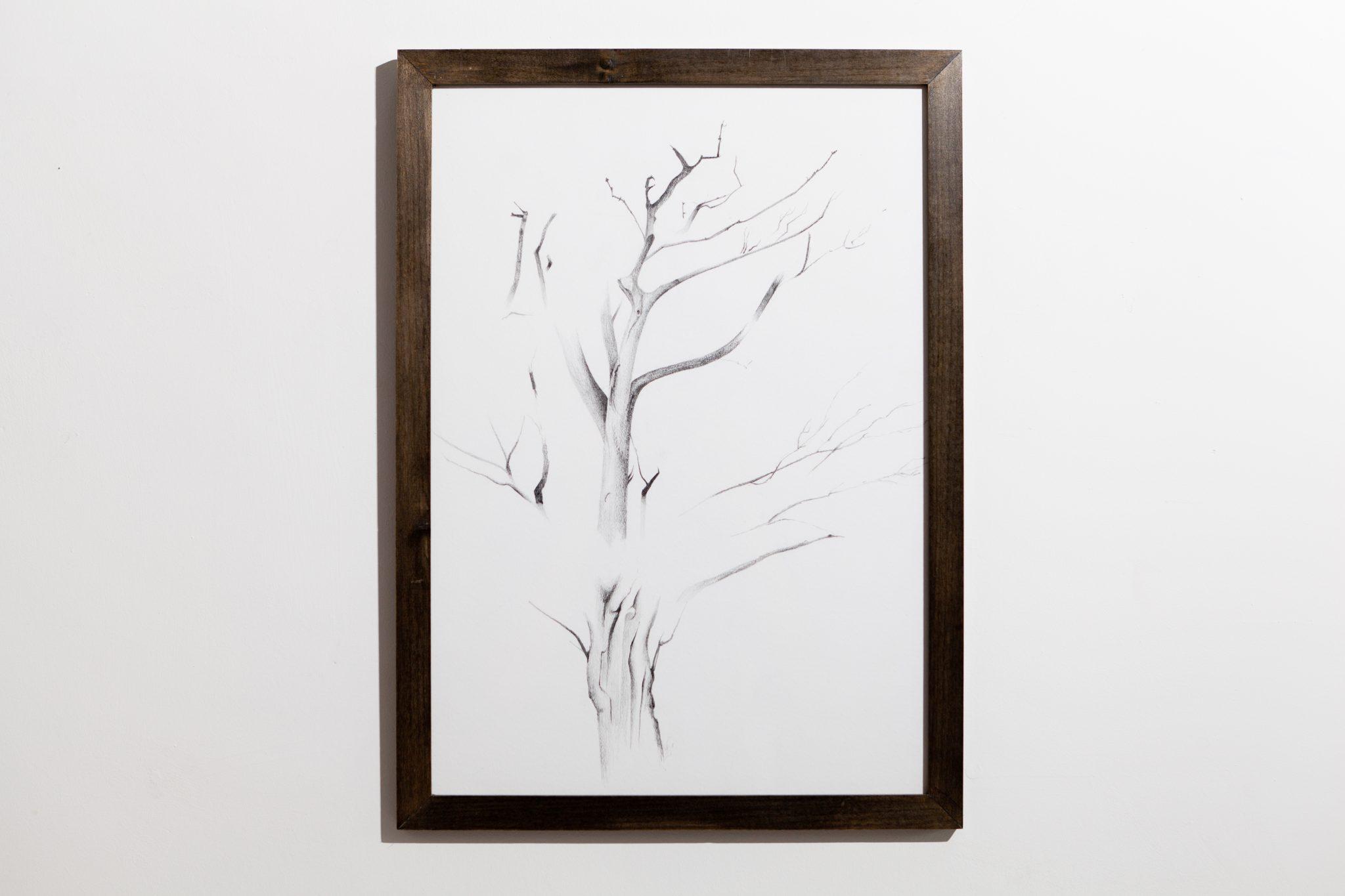 Gallihowe Tree - Pencil on paper